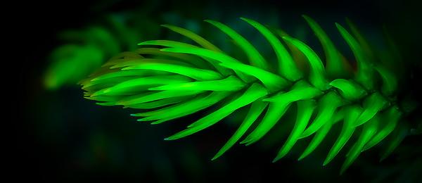 Xmas Green - Paul Fulara