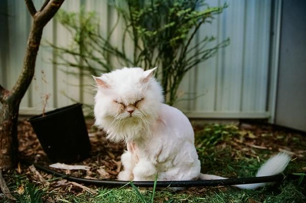 Cat - Glen Moralee