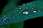 Droplets - Bruce Finkelstein