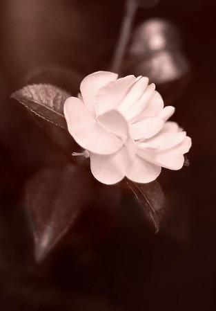 Shining in the Dark - Sybille Bonow