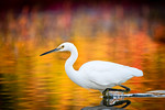 On Golden Waters - Rob Woodbury