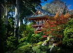 Japan Autumn - Steve Brown
