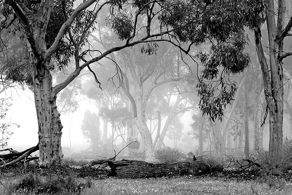 Misty Woods - Phil Burrows