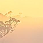 Daybreak - Ron Dullard