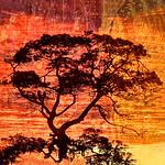 Fiery Sky - Dita Hagendorn