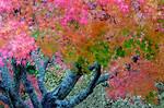 N.Z. Autumn - Phil Burrows