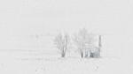 White Out - Ron Dullard