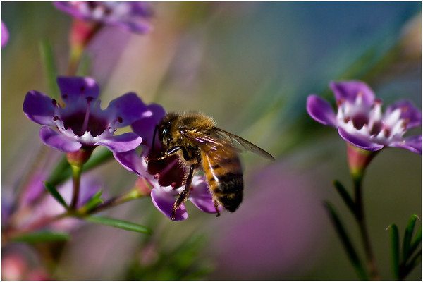 Bee at Work - Martin Yates<br /> First place members' choice and joint third place judge's choice