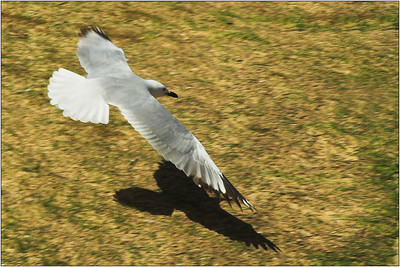 In Flight - Kim McAvoy Set - Third place judge's choice and Fifth place members' choice