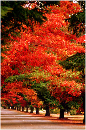 Autumn Rampant - Richard Goodwin<br /> Third place judge's choice and First place members' choice Set
