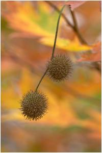 Autumn Seeds - Ann Jones Fourth place members' choice