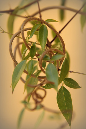 Twisted Vine - Jo Rollinson<br /> Set - Equal first place members' choice and equal third place judge's choice