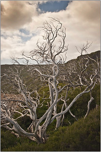 Twisted Branches - Martin Yates Set - Equal sixth place members' choice