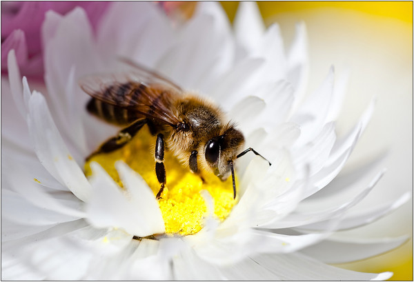 Honeymaker - Sheila Burrow<br /> Fourth place members' choice