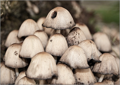 Fungi City - Martin Yates