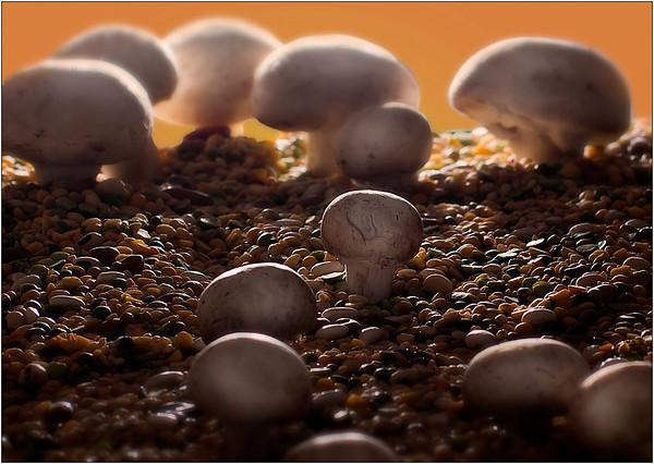 Mushroom Scape - Martin Yates