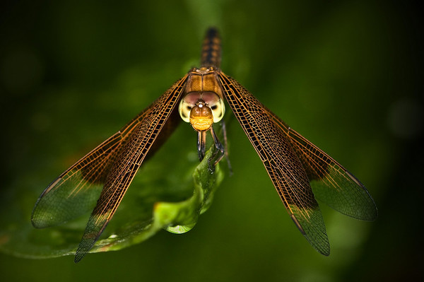 Dragonfly - Martin Yates<br /> First place Judge's choice and first place members' choice.