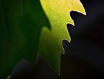 Edge of Leaves - Jo Rollinson<br /> First place members' choice.