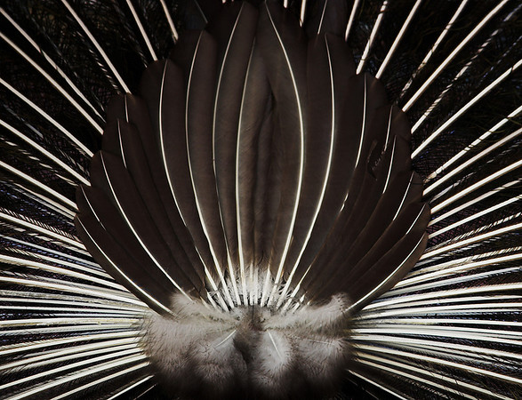 Feathered Fan - Kim McAvoy<br /> Judge's merit and second place members' choice - Set.
