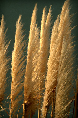 Grasses - Jo Rollinson<br /> Equal third place judge's choice.