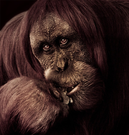 Contemplating - Kim McAvoy<br /> First place judge's choice and third place members' choice.