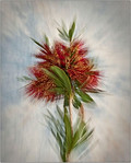 Bottle Brush Zoom - Martin Yates<br /> First place judge's choice and fifth place members' choice - Set.