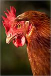 Chicken Kebab-Sheila Burrow<br /> Equal Fourth Members Choice-Open