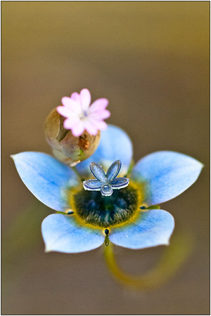 Pastel Blue - Ray Ross<br /> First place members' choice.