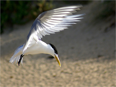 Tern Landing - Phil Burrows Second place members' choice and judge's merit.