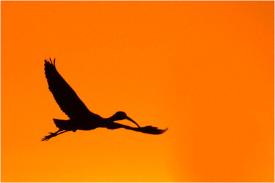 Silhouette - Bruce Finkelstein. Merit Judges choice. Open