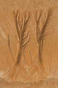 Tree's in the Sand - Tony Stefanoff Merit - Judges Choice. Set