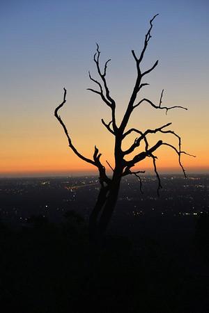 Dark Tree - Ian Barnes