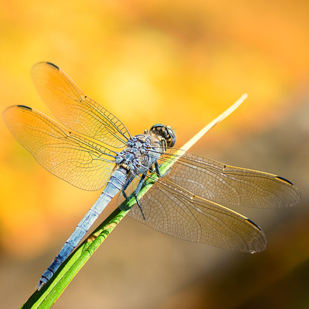 Dragonfly - Ray Ross<br /> Third place members' choice