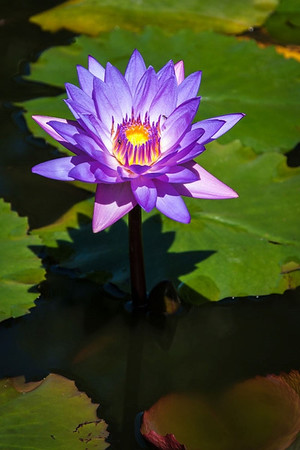 Waterlily - Paul Moore<br /> Sixth place members' choice.