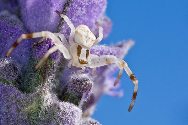 Incy Wincy Spider - Martin Yates<br /> Third Place members' choice.