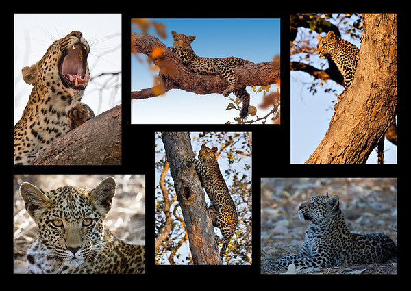 Leopard Story - David Sargeant<br /> Set - Fourth place Members' choice