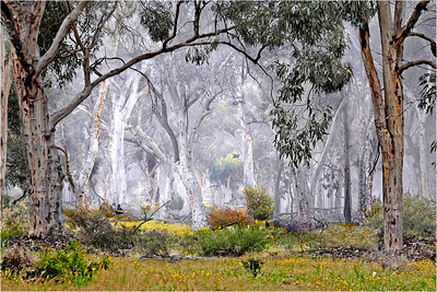 Woodland Mist - Phil Burrows Open - First place judge's choice and first place members' choice