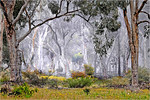 Woodland Mist - Phil Burrows<br /> Open - First place judge's choice and first place members' choice