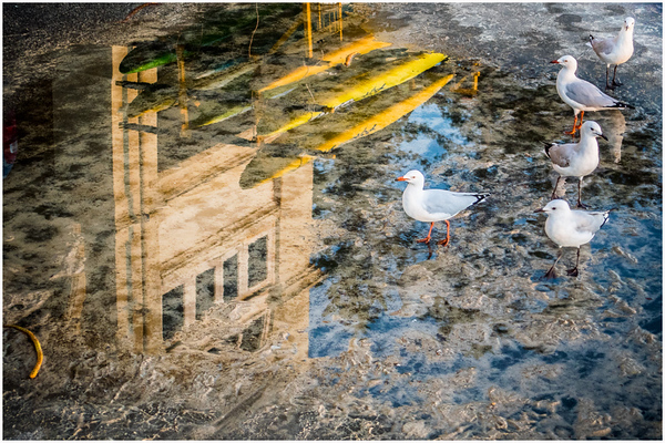Gulls Join Surf Club - Richard Goodwin<br /> Altered Reality - First place members' choice and fourth place members' choice