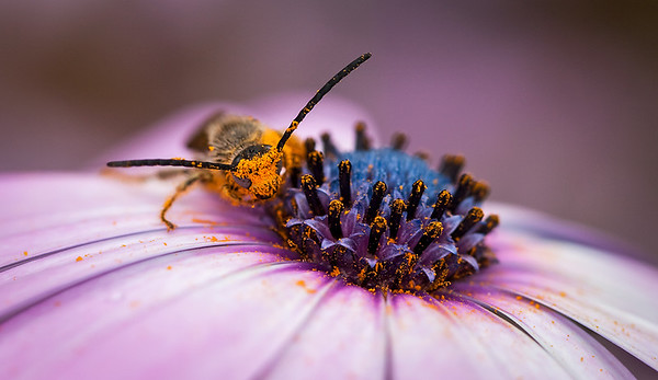 Busy Bee - Stan Bendkowski<br /> First place judge's choice and first place members' choice - Open