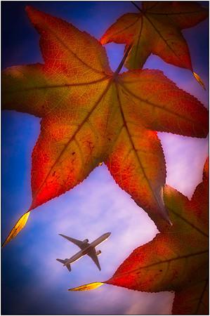Autumn Flight - Martin Yates