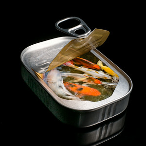 Canned Koi - Ray Ross