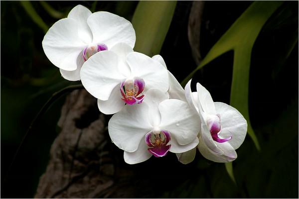 Four Orchids - Phil Burrows
