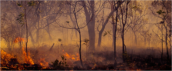Kakadu Wildfire - Richard Goodwin
