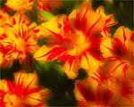 Tulip Turmoil - Jocelyn Manning