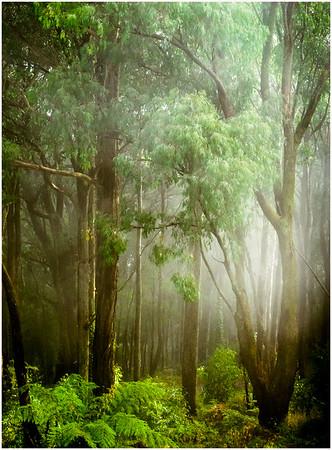 Foggy Glade - Richard Goodwin
