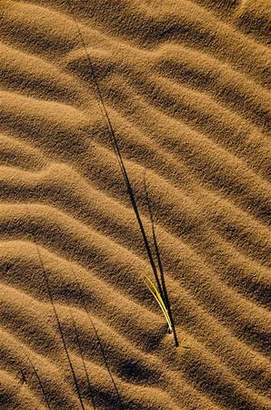 Textured Shadows - Kim McAvoy