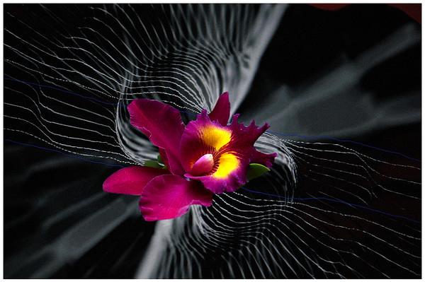 Orchid Lines - Grace Munday
