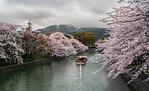 Sakura Blossom - Valeria Bolotova