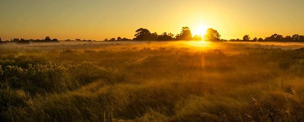 Golden Mist - Max Clancy-Lowe